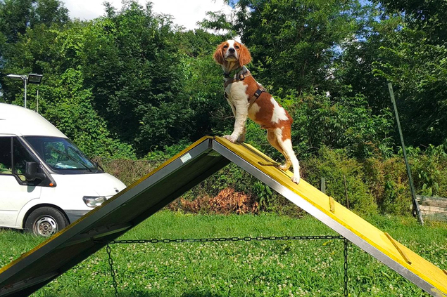 Agility - Dog Academy Italia, Addestramento cani Varese