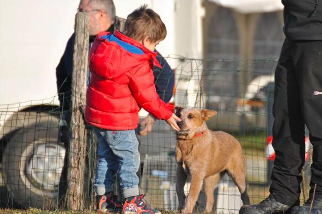 Consueling - Dog Academy Italia, Addestramento cani Varese