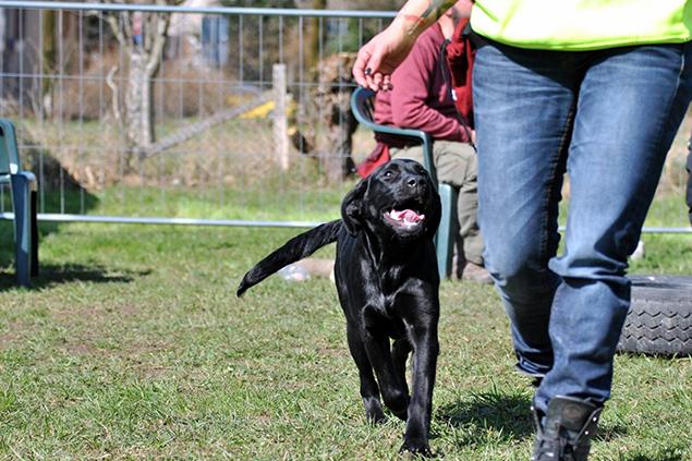 Educatore Cinofilo - Dog Academy Italia, Addestramento cani Varese