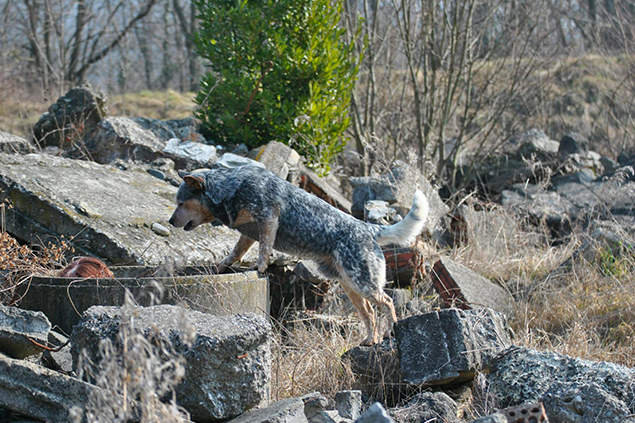Ricerca su macerie - Dog Academy Italia, Addestramento cani Varese