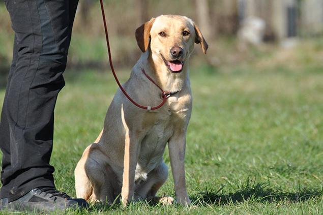Dog Sitter - Dog Academy Italia, Addestramento cani Varese
