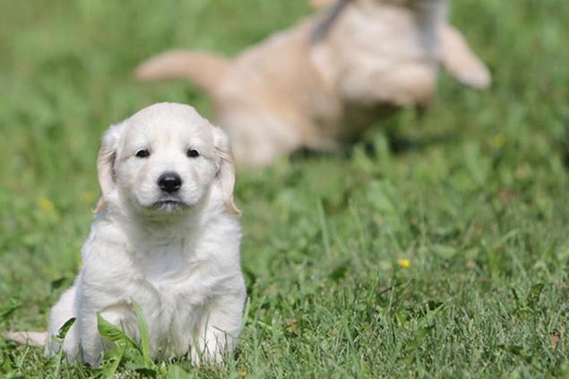 Consulenza pre-adozionale - Dog Academy Italia, Addestramento cani Varese