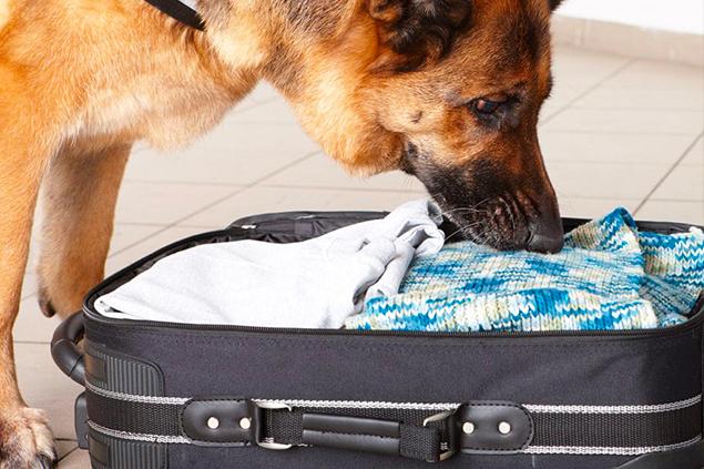 Detection - Dog Academy Italia, Addestramento cani Varese