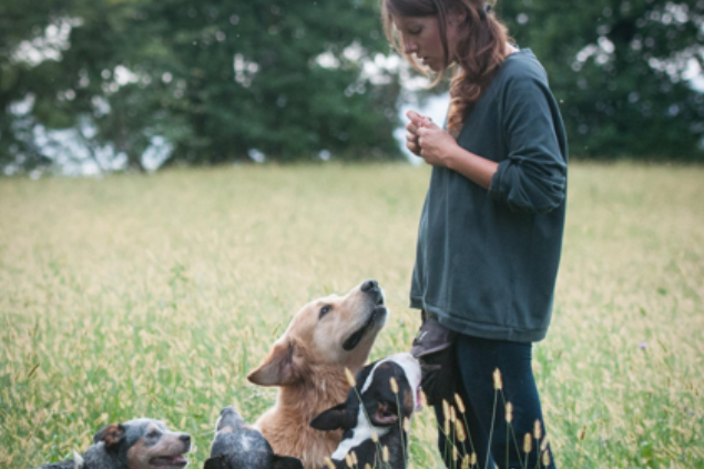 Alice Spinelli – Dog Academy Italia, Addestramento cani Varese