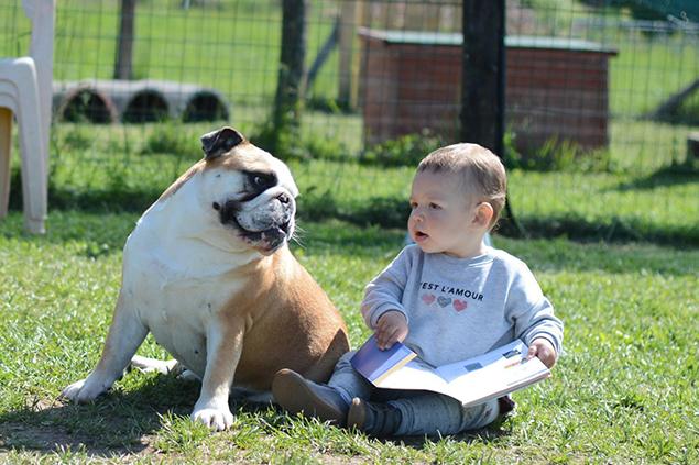 Arriva un neonato - Dog Academy Italia, Addestramento cani Varese