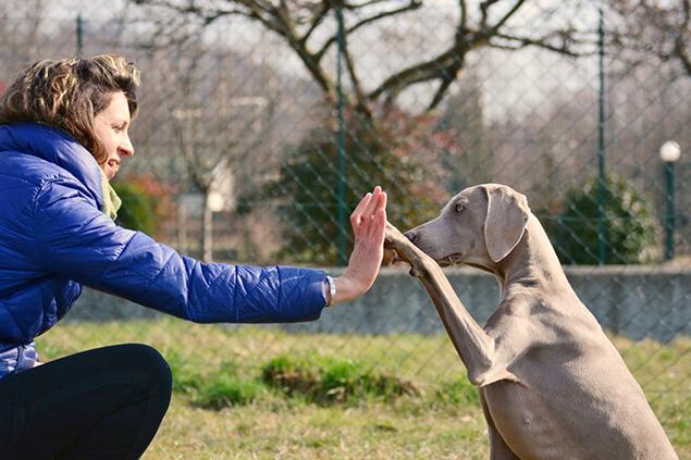 Clicker Training - Dog Academy Italia, Addestramento cani Varese