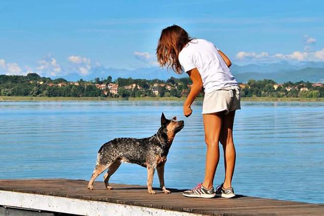 Handling - Dog Academy Italia, Addestramento cani Varese