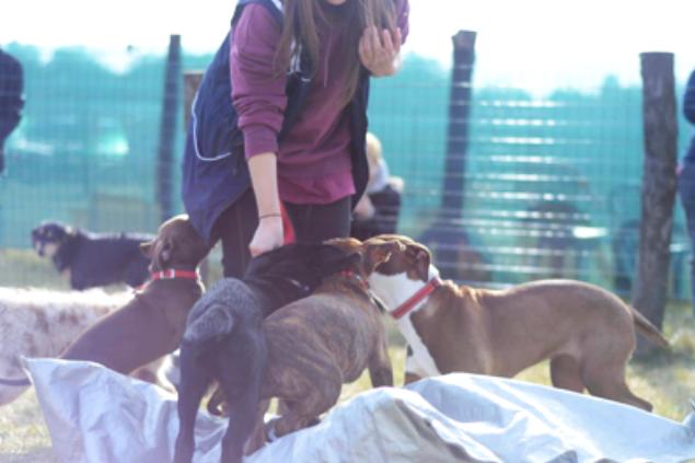 Puppy Class - Dog Academy Italia, Addestramento cani Varese