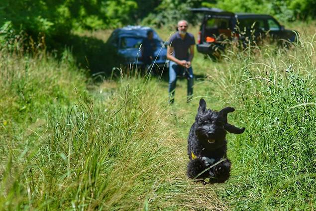 Ricerca in superficie - Dog Academy Italia, Addestramento cani Varese