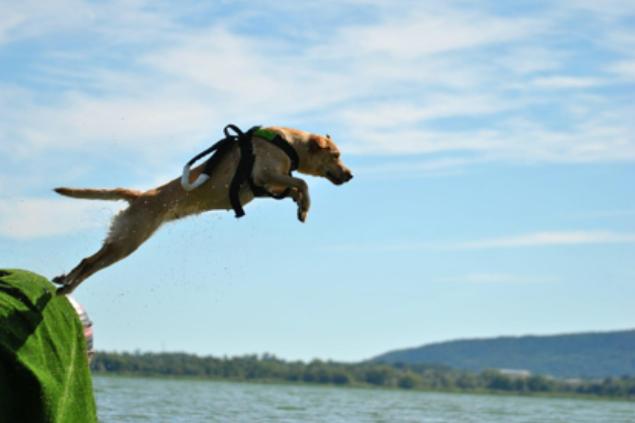 Soccorso nautico - Dog Academy Italia, Addestramento cani Varese